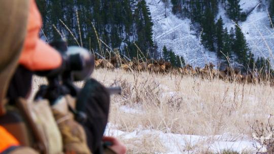 Montana elk hunting