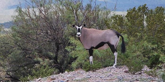 WHSA_Oryx-Landing-page